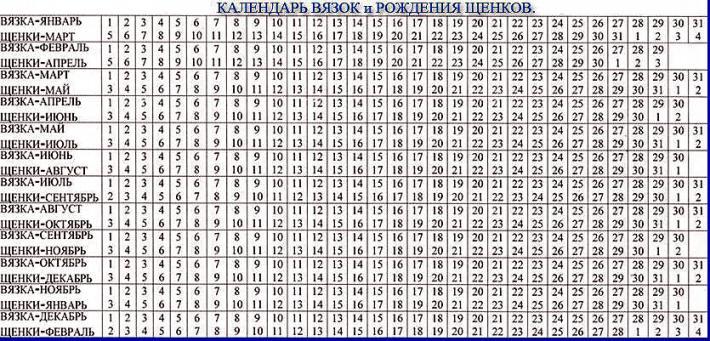 Календарь вязка/роды суки
